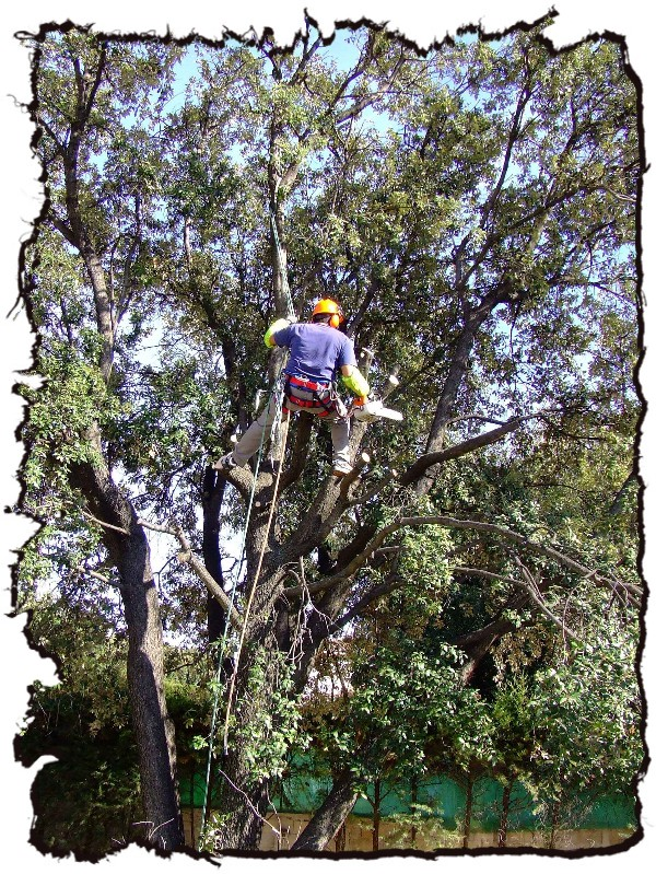 abattage d'arbres brignoles