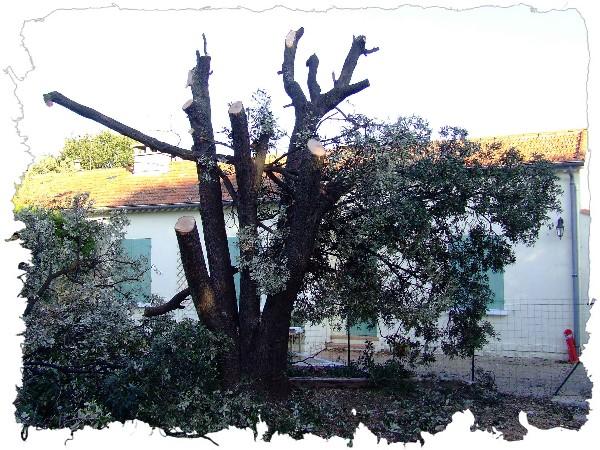 abattage d'arbre Var