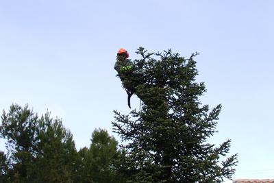 étêtage arbre brignoles